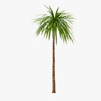 palm 010 3d model