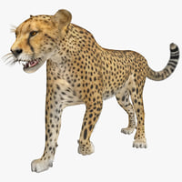 cheetah 2 pose 1 3d model