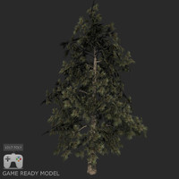 Pine tree low poly