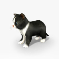 kitten animations rig 3d max