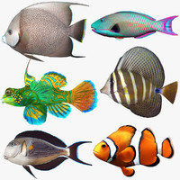 3ds saltwater fish