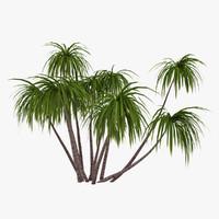 3d model palm 013