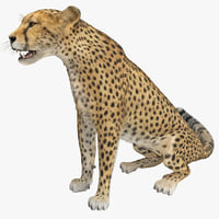 cheetah 2 pose 3 3d max