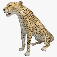 cheetah pose ds