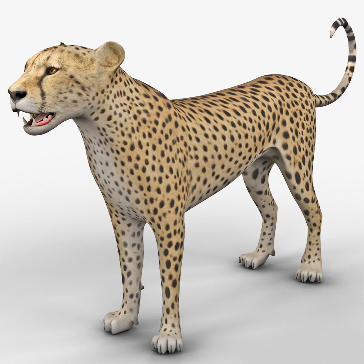 Cheetah 2 Rigged_10.jpg