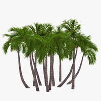 3d palm 018