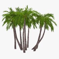 palm 017 3ds