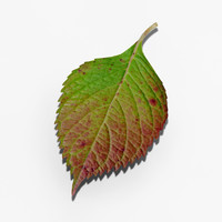 3d outer bush leaf model