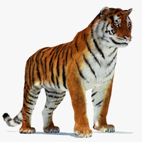 amur siberian tiger cat 3d 3ds