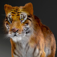 realistical tiger rigged 3d max