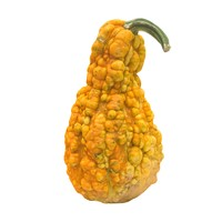 pumpkin vegetable 3d model