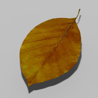 3ds common beech tree leaf