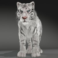 realistical white siberian tiger 3d 3ds