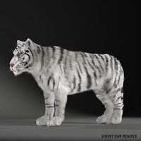 realistical white siberian tiger 3ds
