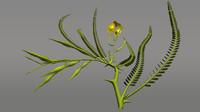 parkinsonia flowering fabaceae 3d obj