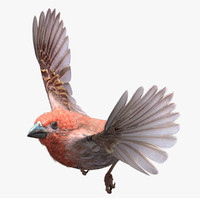 house finch 3d lwo
