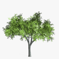 Elm Tree Low Poly