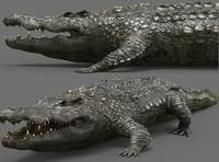 3d crocodile croc cro