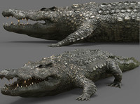 3d crocodile croc cro model