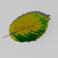 3d hornbeam tree landscape leaf model