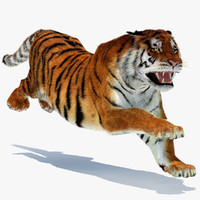 3d model amur siberian tiger cat