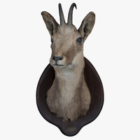 Taxidermy 01. Chamois Head
