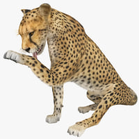 cheetah 2 pose 5 max