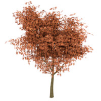 Maple Tree Autumn Low Poly