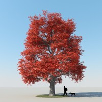 realistic maple tree autumn 3d model