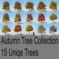 Maple Tree Autumn Collection