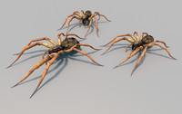 fishing spider animation 3d max