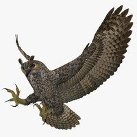 3d bubo virginianus great horned model
