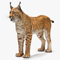 maya lynx eurasian
