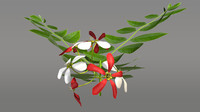 quisqualis flower 3d model