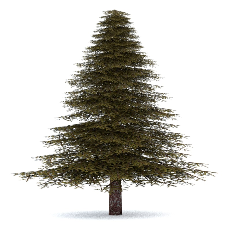 fir_tree_3_lable.png