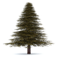 3d realistic fir tree 3