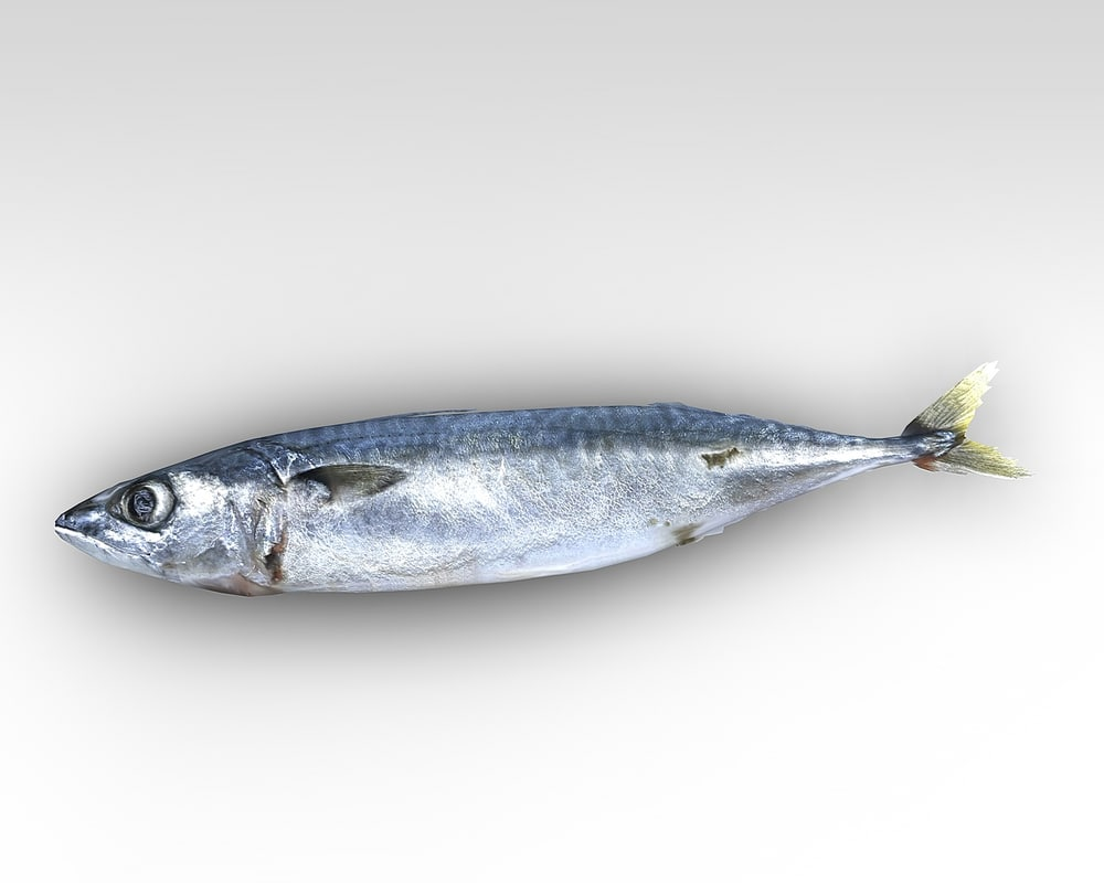 fish5.jpg
