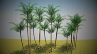 palm leaf max