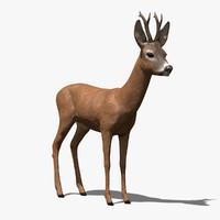 cinema4d roe-deer-buck antlers