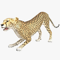 3ds max cheetah 2 pose 4