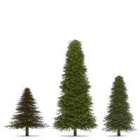 realistic fir tree 3d model