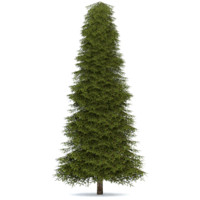 3ds realistic fir tree 4