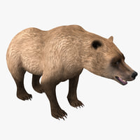 3d grizzly bear model