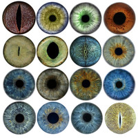 17 Iris Textures