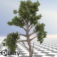 pine tree 04 3d model