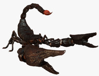 3d model scorpion arachnid