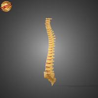 3ds max vertebra