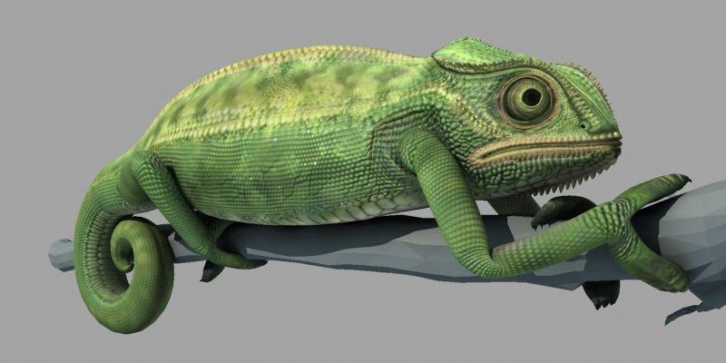 chameleon_0000_1.jpg