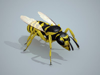 maya wasp insect bee