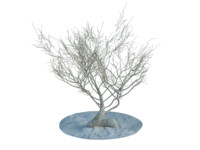 3d random desert dry trees bushes model